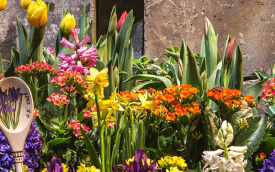 Looking for Spring? Look no more. Get out there and check out these home and garden resources.