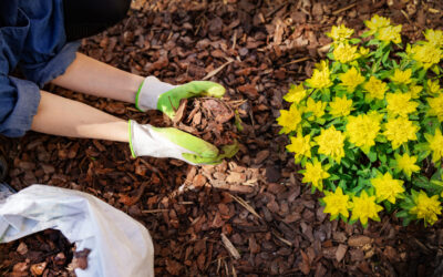 Mulch Your Soil Now to Set the Stage for an Abundant Season of Color!
